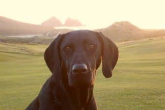 Dog Friendly Trevornick